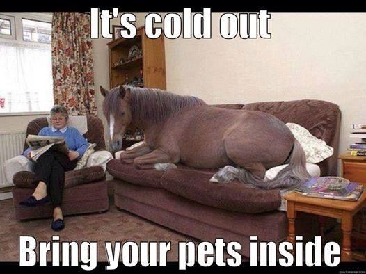 141924-It-s-Cold-Outside-Bring-Your-Pets-Inside.jpg